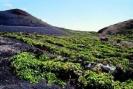 Las Machuqueras Wine Growing Area :: Paraje vitícola Las Machuqueras